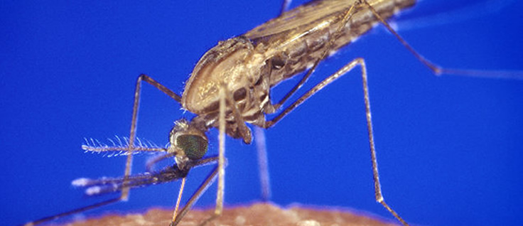 close-up of mosquito biting human skin